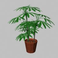 Potted Palm Small